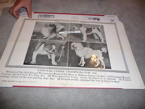 Westminster Dog Show 1928 bulldog Current news poster
